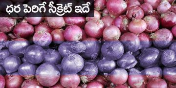 Onion Prices Increase Rs 120 per Kg