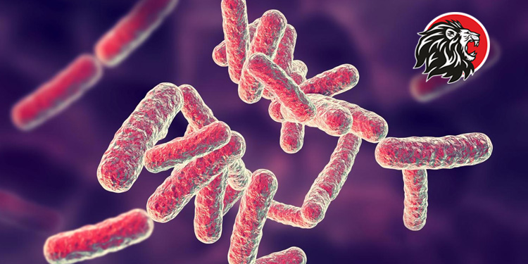 shigella bacterial infection