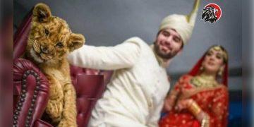 సింహం పిల్లతో ఫొటోషూట్ - www.theleonews.com