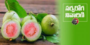 Health Benefits of Guava Fruit - www.theleonews.com